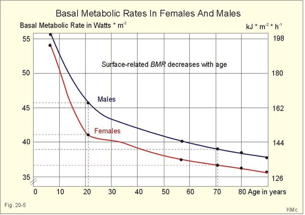 basal metabolic rate with age and sex