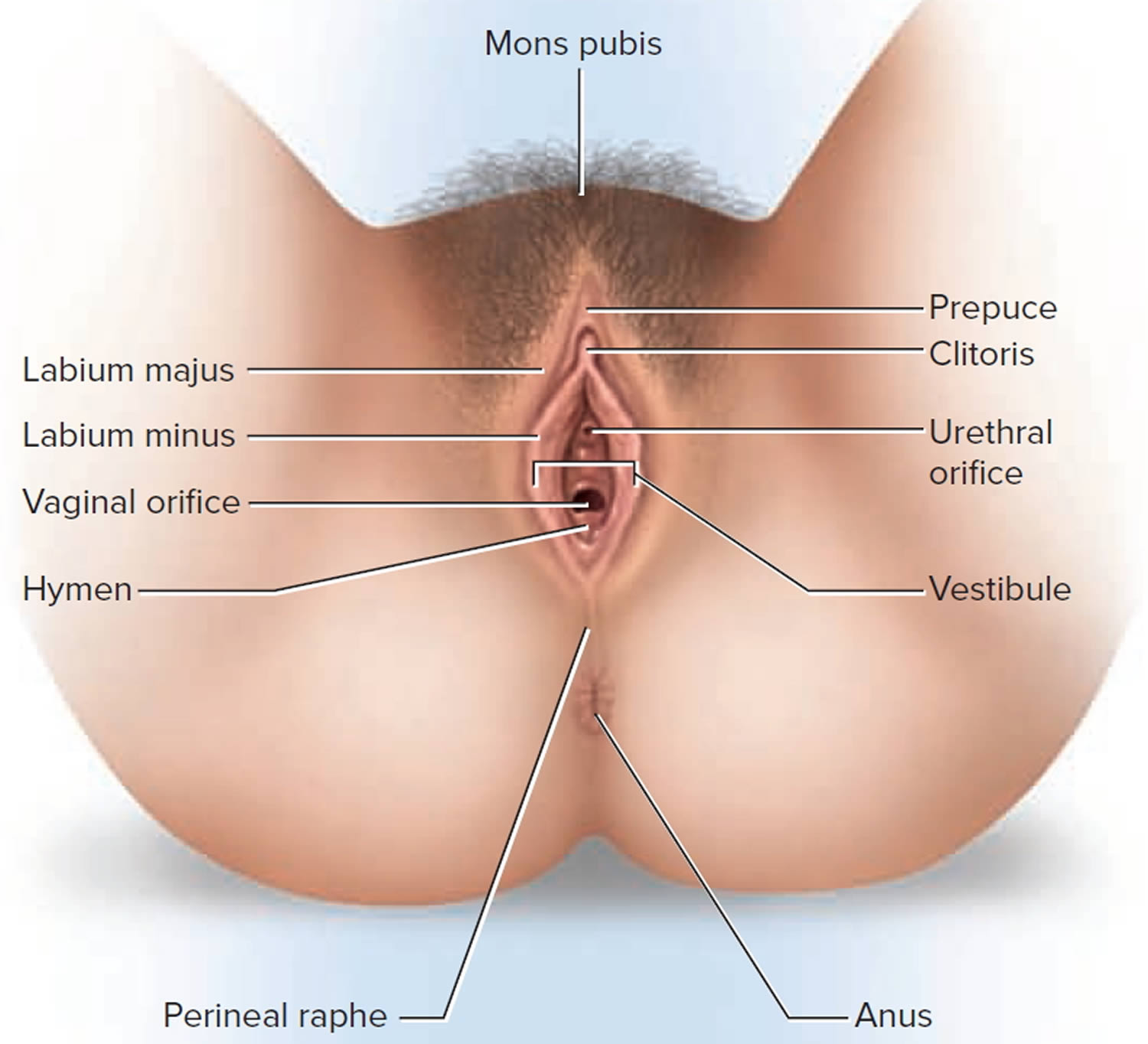What the lumps on your vagina mean and how to get rid of them