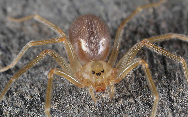 Пони пауки картинки относительно
