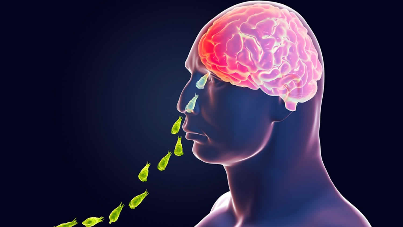 Naegleria fowleri amoeba or brain eating amoeba infection and treatment