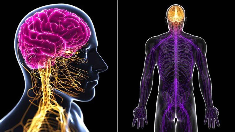 Mononeuritis multiplex