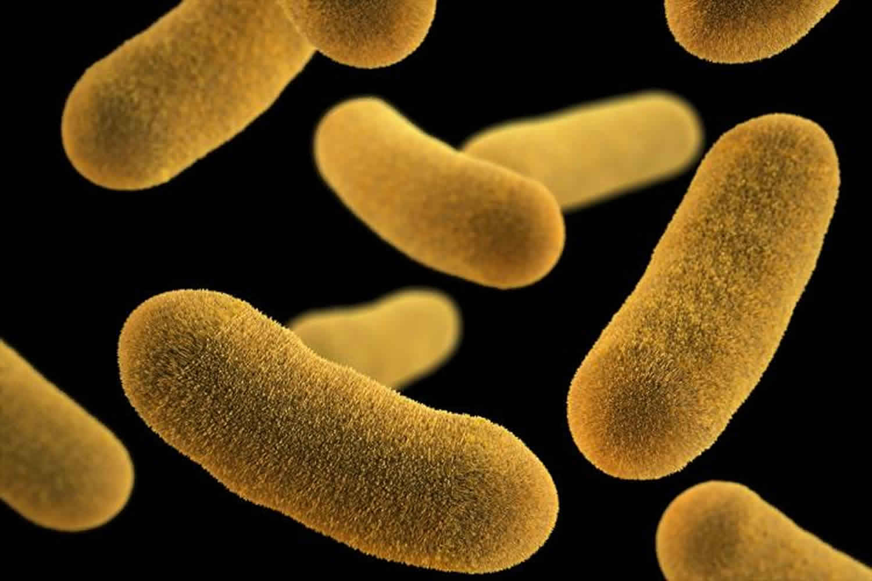 Yersinia enterocolitica infection: symptoms and treatment