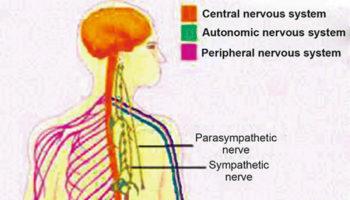 morvan syndrome
