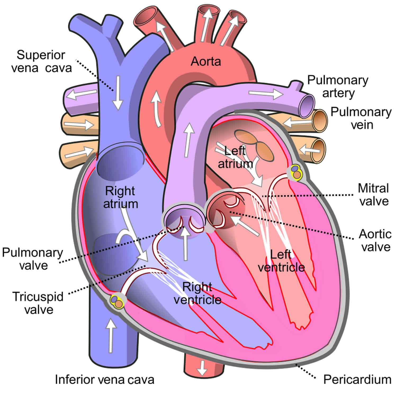 pulmonary insufficiency