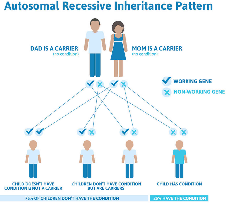 Congenital insensitivity to pain autosomal recessive inheritance pattern