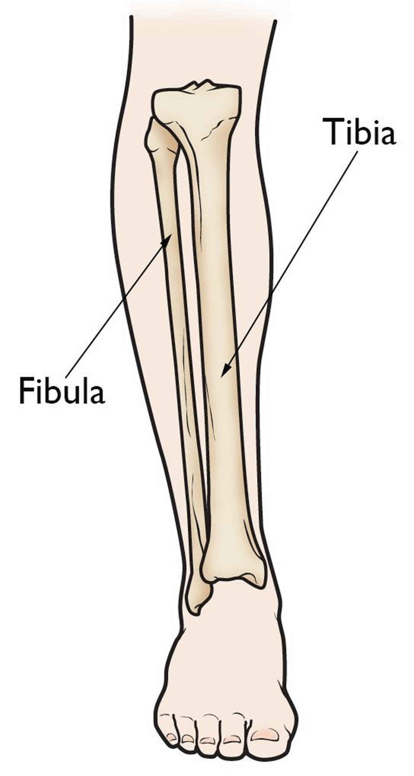 Normal leg bones