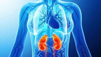 renal ischemia