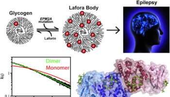 Lafora disease
