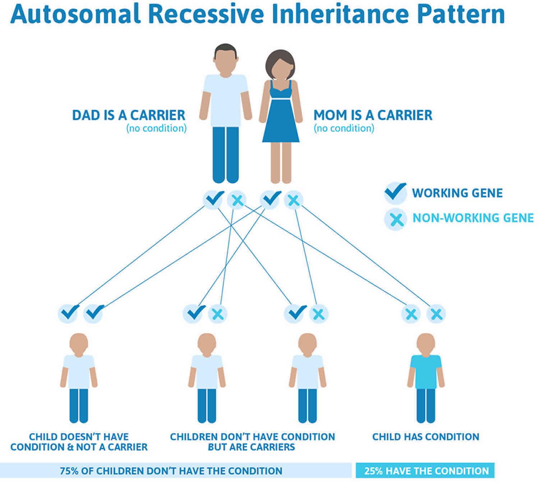 Trichothiodystrophy autosomal recessive inheritance pattern