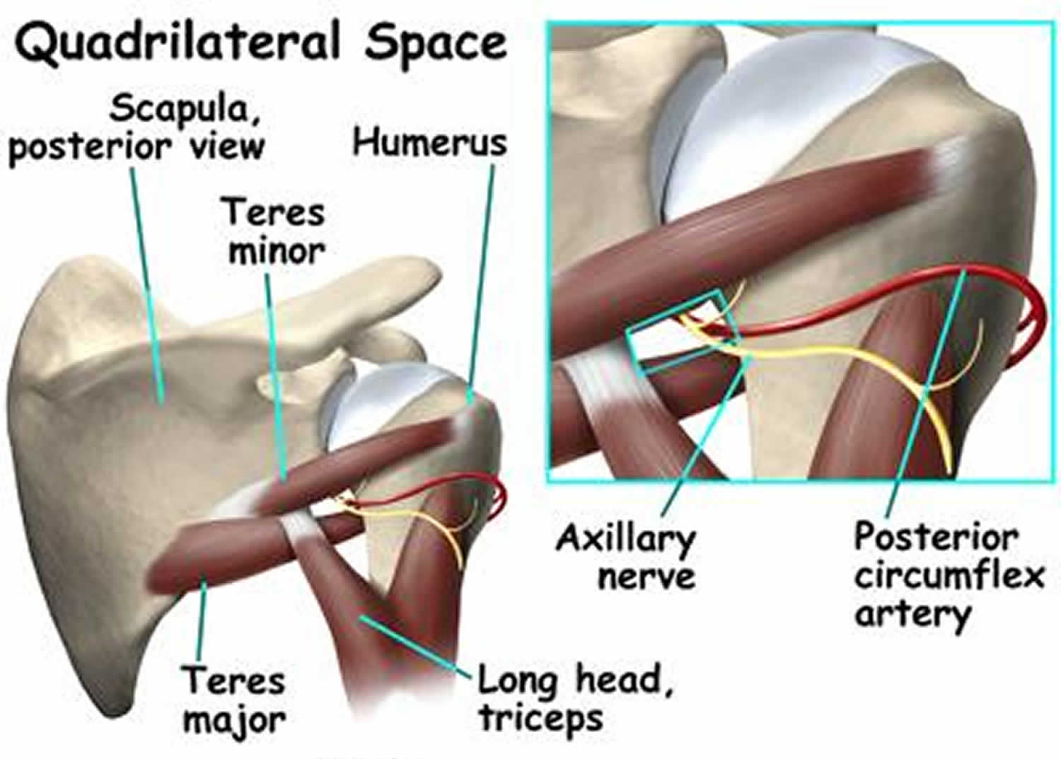 quadrilateral space syndrome