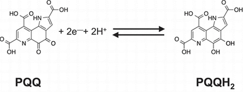 Pyrroloquinoline quinone redox reaction
