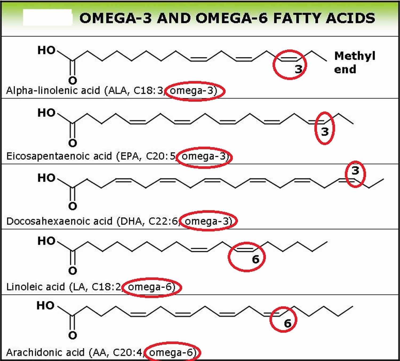 Omega-6 and omega-3 fatty acids